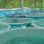 Fish Farms